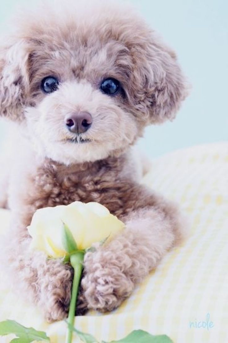 TOP 10 Most Popular Dog Breeds In USA For 2014