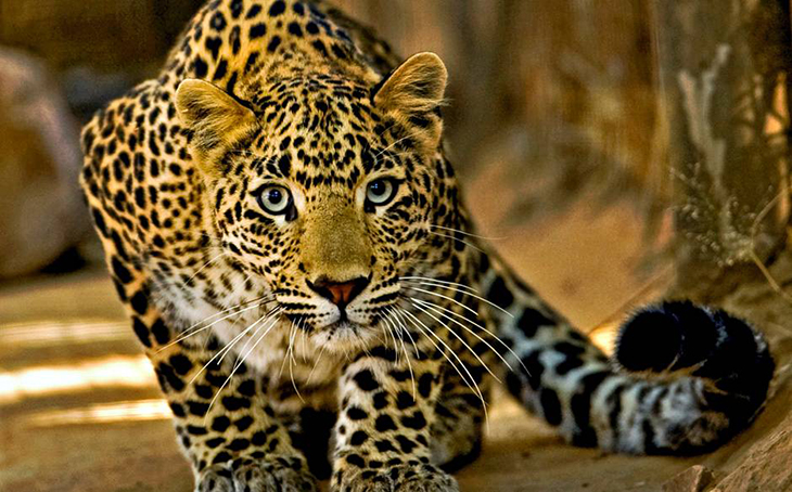 Top 10 Photos of Big Cats