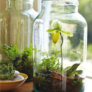 Top 10 DIY Indoor Garden Ideas | Top Inspired