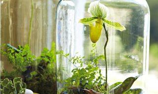 Top 10 DIY Indoor Garden Ideas   Top Inspired