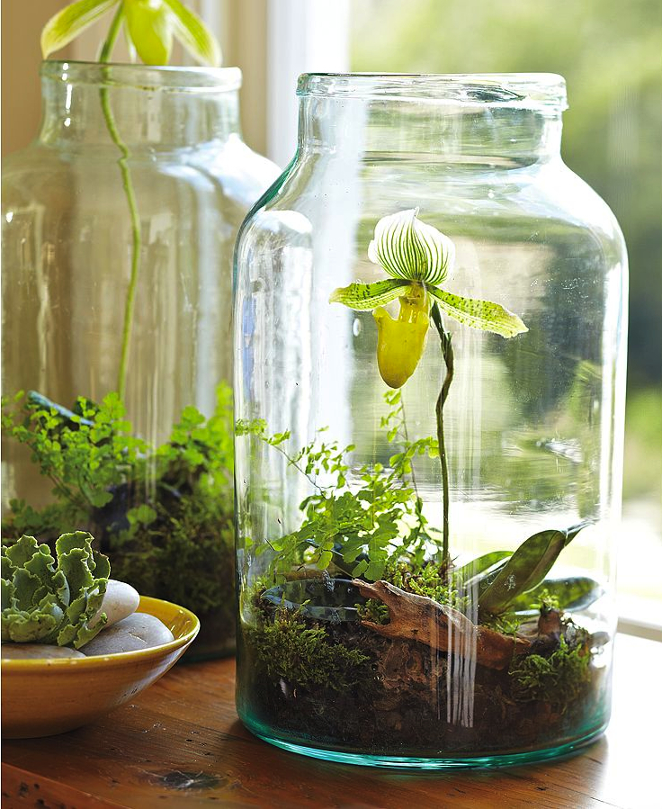 Top 10 DIY Indoor Garden Ideas | Top Inspired