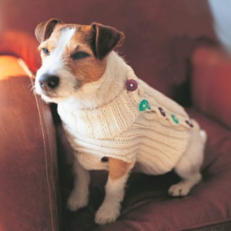 Button-Up-Dog-Sweater