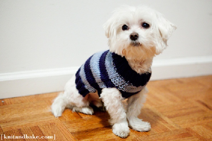 Knitting Pattern For A Small Dog Coat : Top 10 Free Knitting Patterns For Cats and Dogs - Top Inspired
