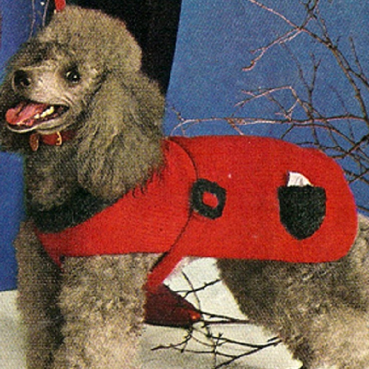 knit_dog_coat_pdf_pattern_with_bib_strap_pocket_