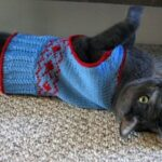 prep-school-cat-vest-150x150