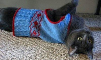 Top 10 Free Knitting Patterns For Cats and Dogs | Top Inspired