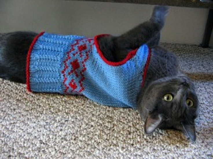 Knitting Pattern Cat Clothes : Top 10 Free Knitting Patterns For Cats and Dogs - Top Inspired