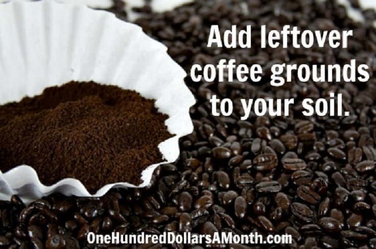 add-leftover-coffee-grounds-to-your-soil