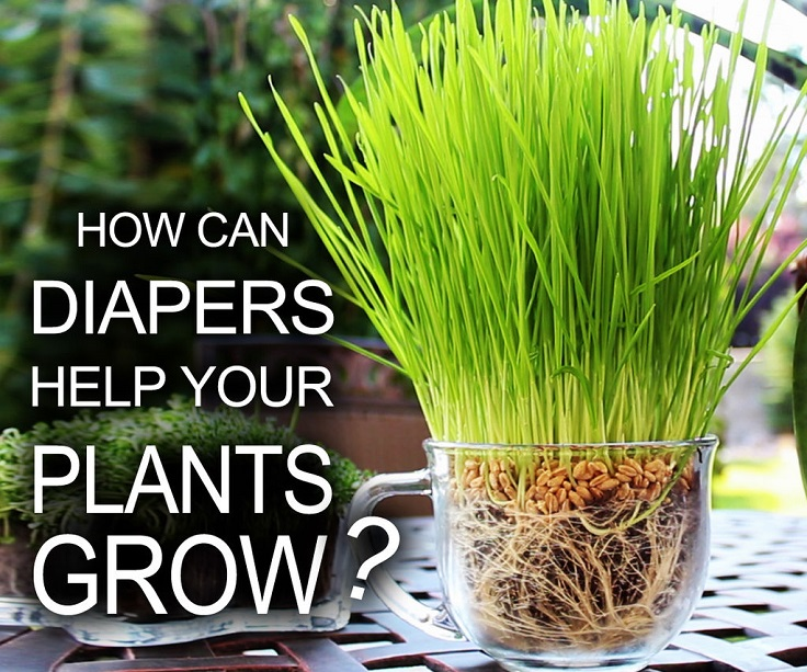 moisture-plants-with-diaper