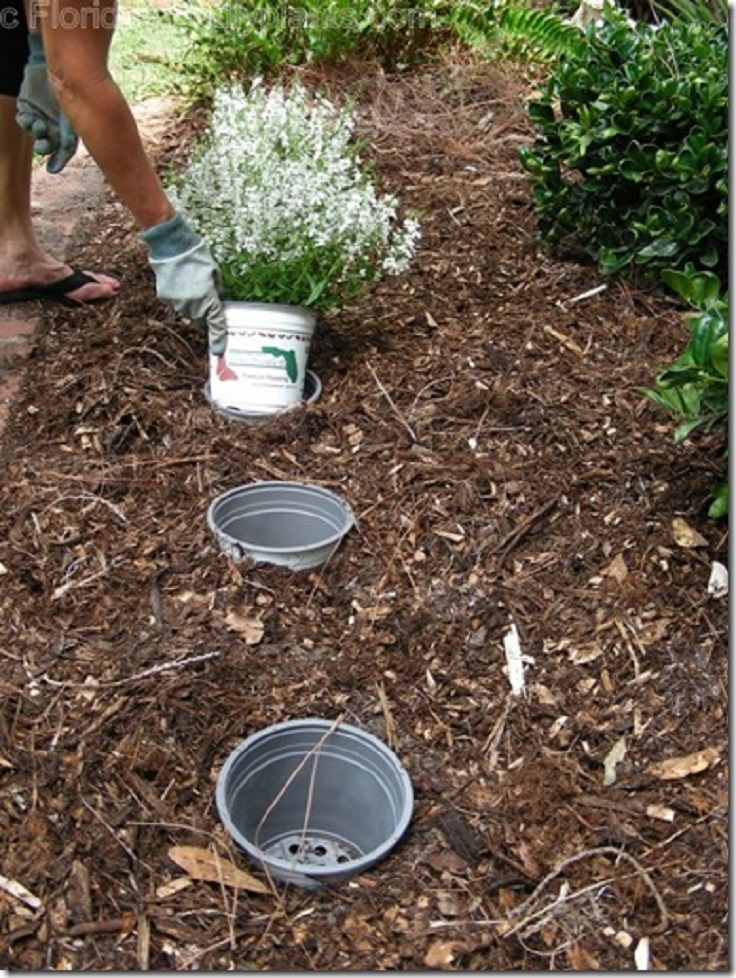 Captivating Top 10 Gardening Tips And Tricks Amazing Design