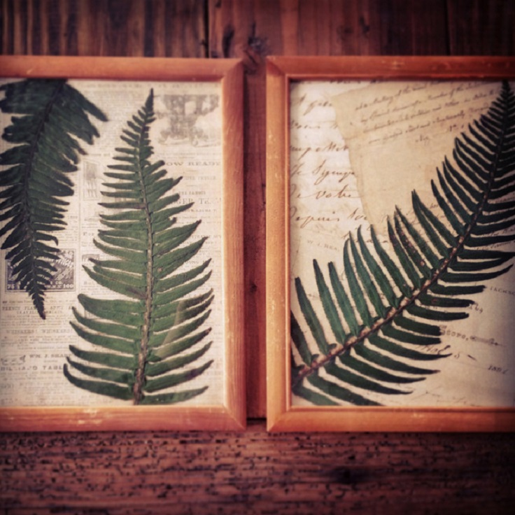 pressed-ferns-wall-art