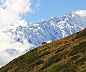 Top 10 Most Popular Himalayan Trekking Routes