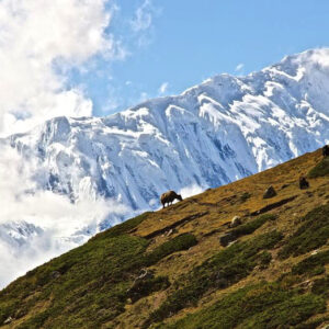 Top 10 Most Popular Himalayan Trekking Routes   Top Inspired