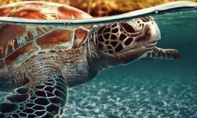 TOP 10 Countries for Watching Nesting Sea Turtles | Top Inspired