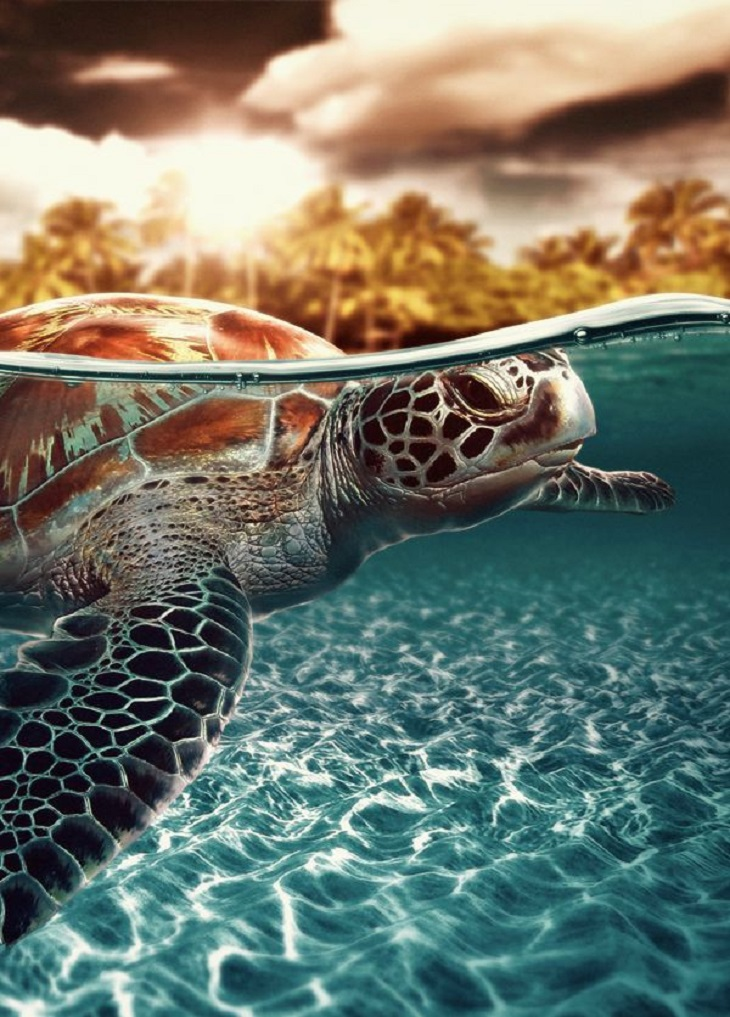 TOP 10 Countries for Watching Nesting Sea Turtles