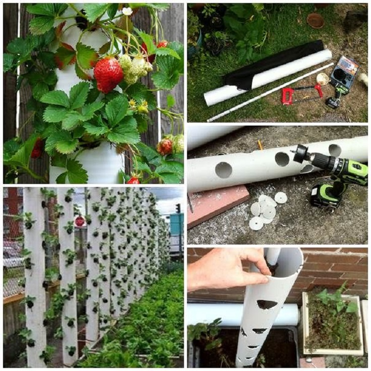 4-PVC-pipe-vertical-garden-ideas