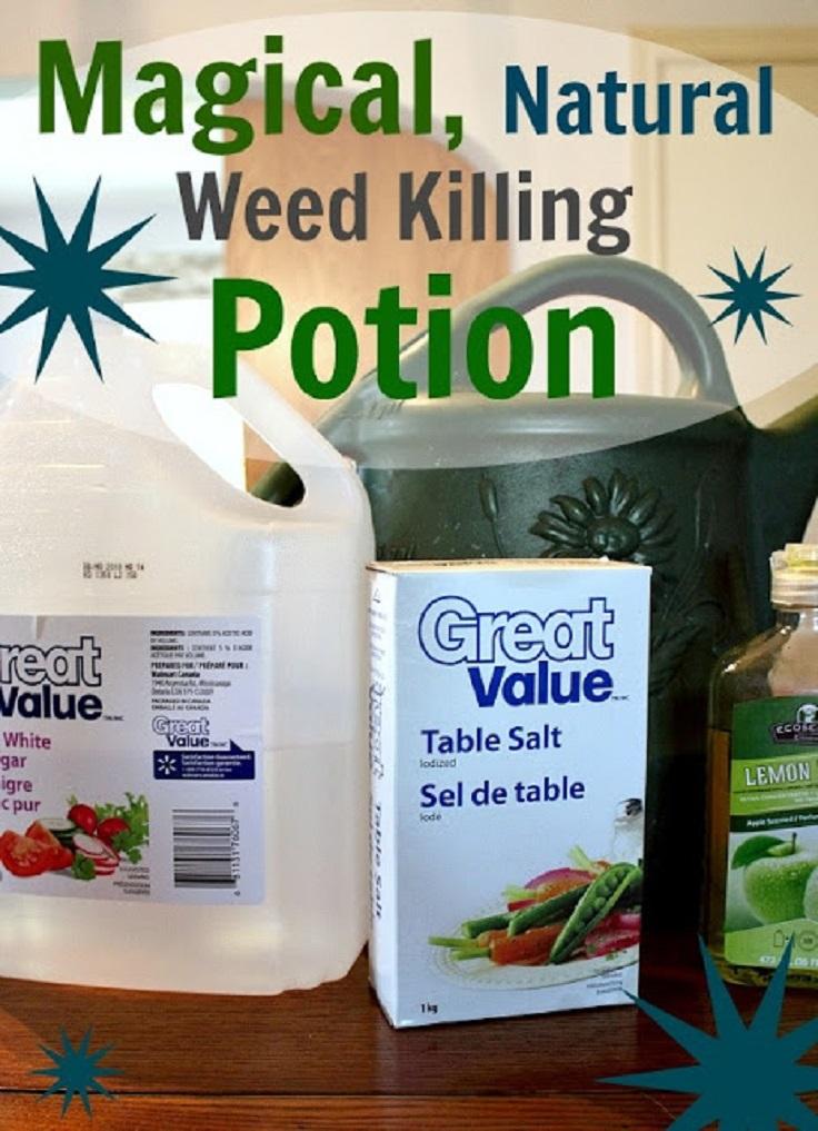Best Natural Weed Killer
