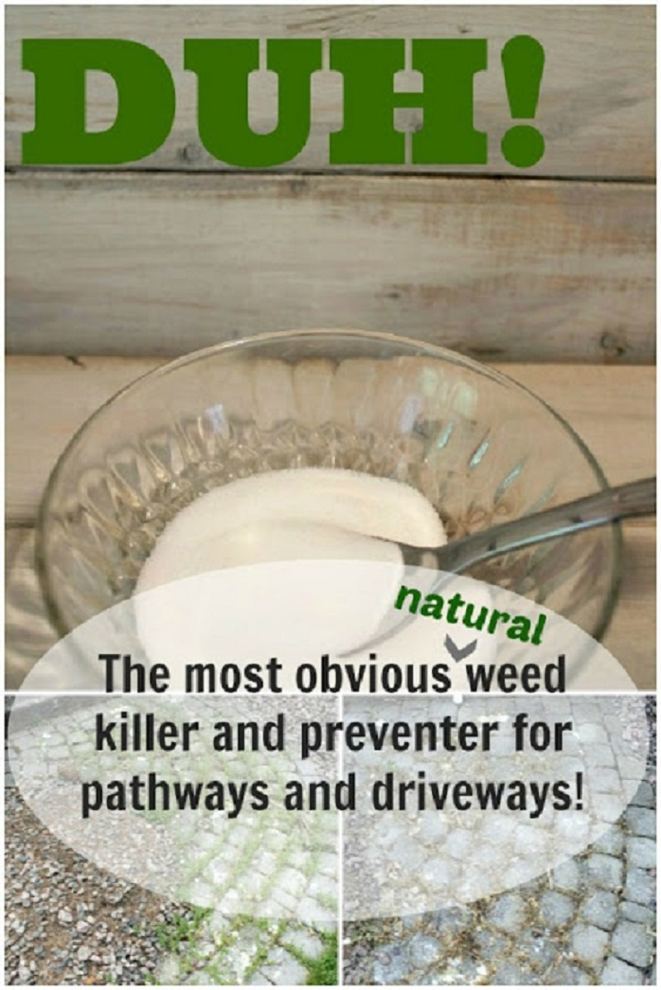 Image Result For Kill Weeds In Grnaturally
