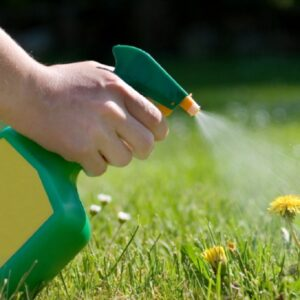 TOP 10 Homemade Weedkillers That Will Kill The Weed Without Killing The Plant | Top Inspired