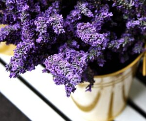 Top 10 Plants That Repel Mosquitoes