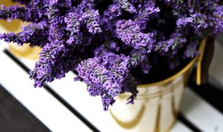 bucket-of-lavender