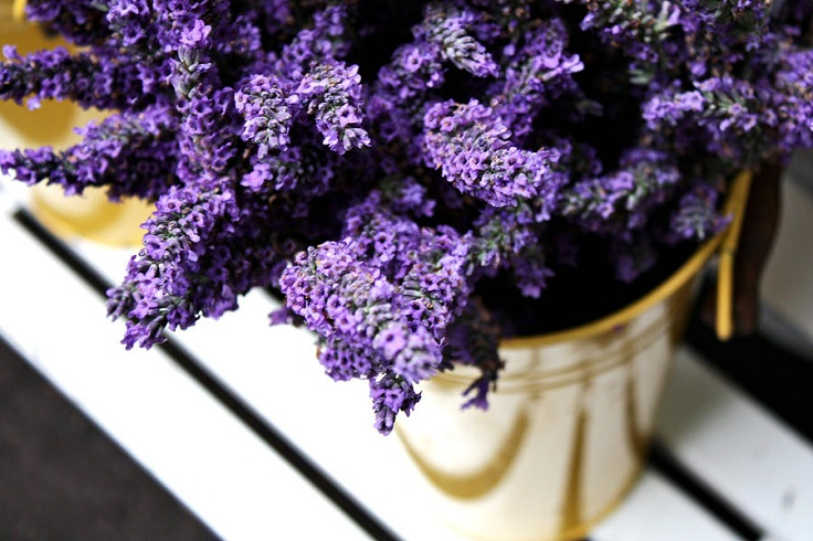 Top 10 Plants That Repel Mosquitoes | Top Inspired