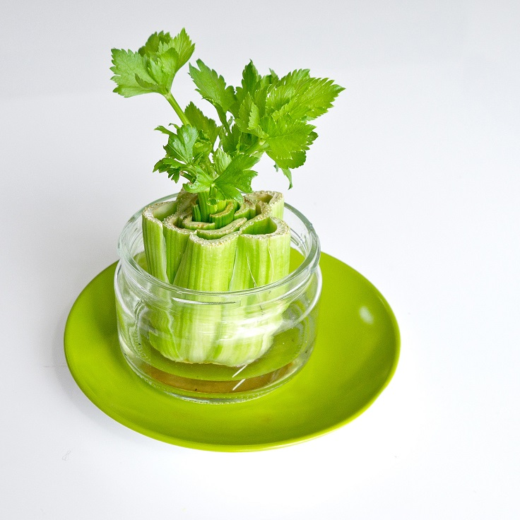 Grow Vegetables From Kitchen Scraps: Top 10 Foods You Can Regrow From Kitchen Scraps