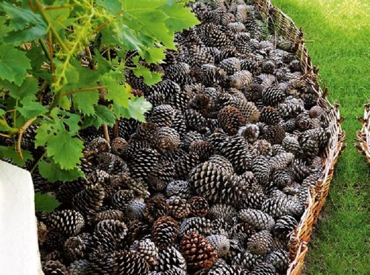 pine-cone-bedding