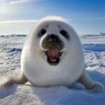 10 Arctic Species and the facts you should know about them | Top Inspired