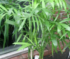 Top 10 Air Detoxifying Plants for Indoor Use