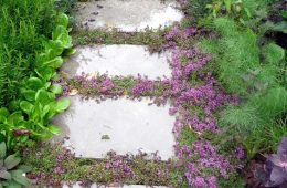 TOP 10 Plants and Ground Cover for Your Paths and Walkways | Top Inspired