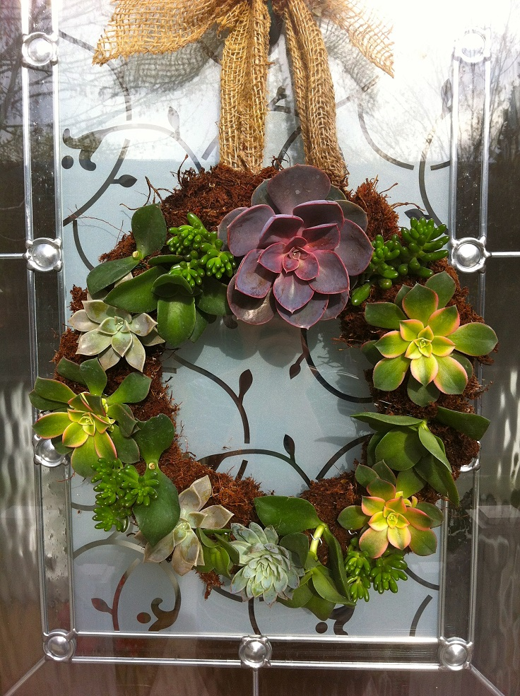 DIY-Living-Succulent-Wreath
