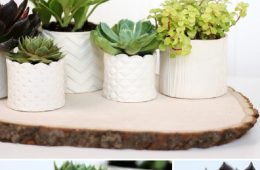 TOP 10 Fun DIY Projects with Succulent Plants | Top Inspired