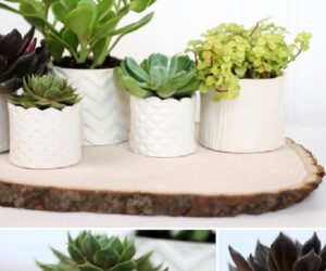 TOP 10 Fun DIY Projects with Succulent Plants