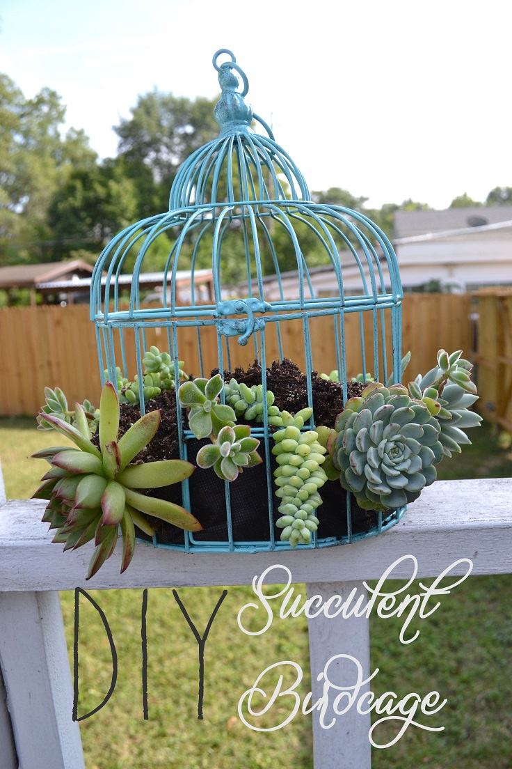 DIY-Succulent-Birdcage