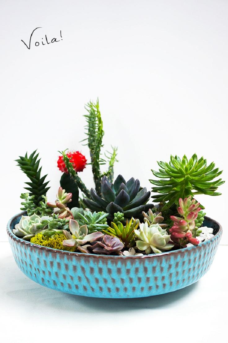 DIY-Succulent-Garden