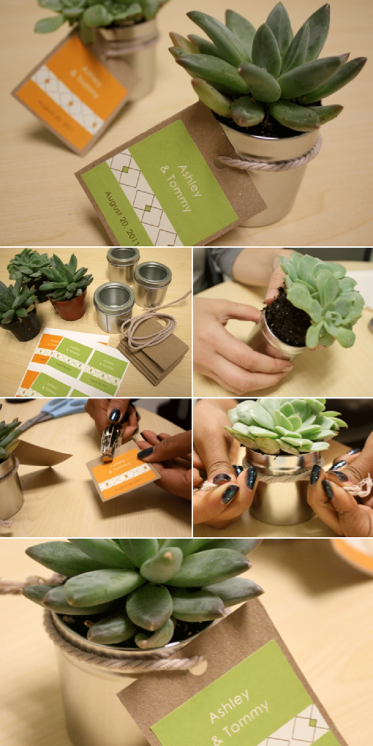 DIY-Succulent-Wedding-Favors