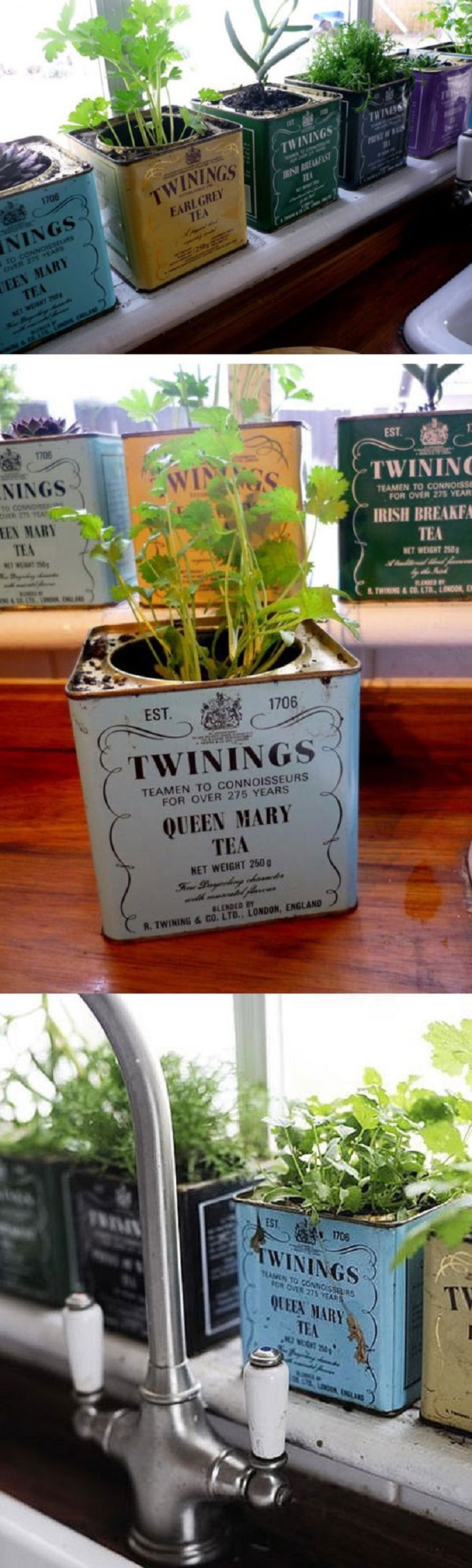 DIY-Twinings-Tea-Herb-Containers