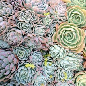 TOP 10  Stylish Succulents for Your Home Garden | Top Inspired