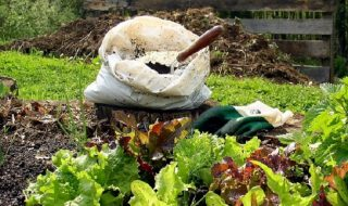 How-to-Use-The-Compost-in-Your-Garden