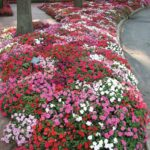 TOP 10 Plants for Successful Underplanting   Top Inspired