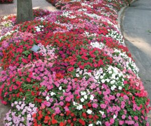 Top 10 Plants for Successful Underplanting