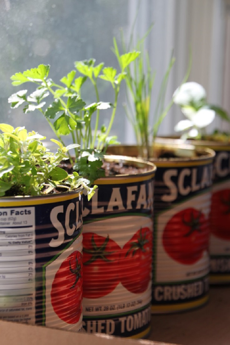 ... create your own little indoor herb garden. #Gardening #DIY #Planters