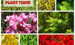 TOP-10-Best Plants-for-Hedges and-How-to-Plant-Them