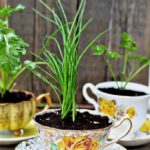 Teacup-Eco-Friendly-Herb-Pots-150x150