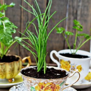 TOP 10 Inspiring Low-Budget Ideas for Herb Containers | Top Inspired