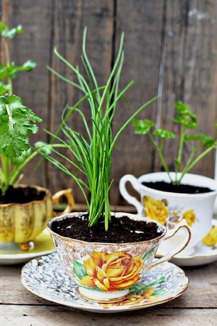 TOP 10 Inspiring Low-Budget Ideas for Herb Containers