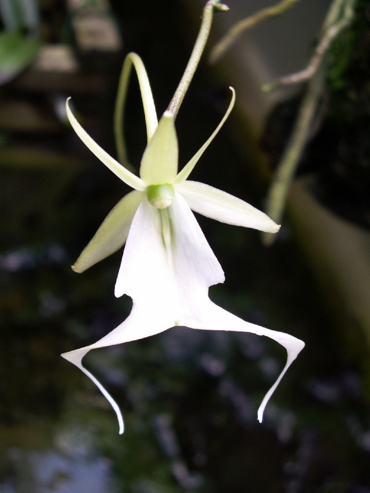 TOP 10 Rarest Orchids in the World