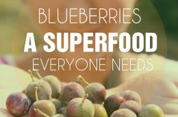 TOP 10 Tips for Growing Blueberries in the Home Garden | Top Inspired