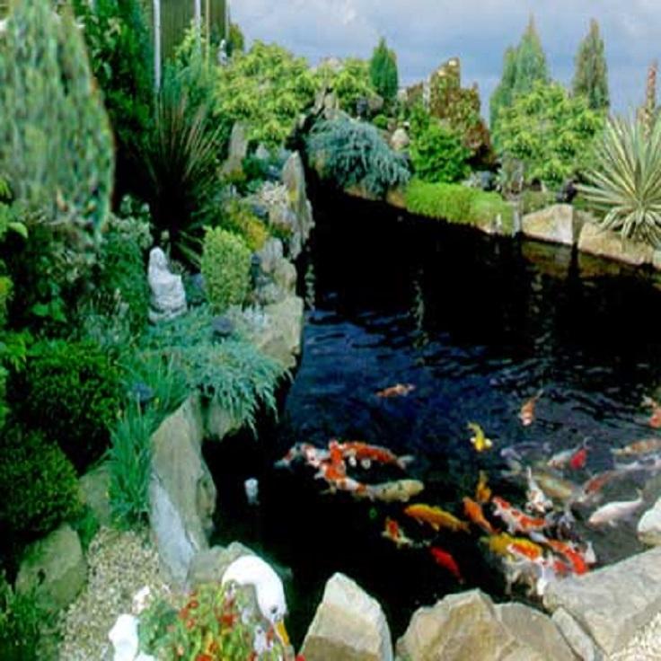 9 Garden Pond Aquarium